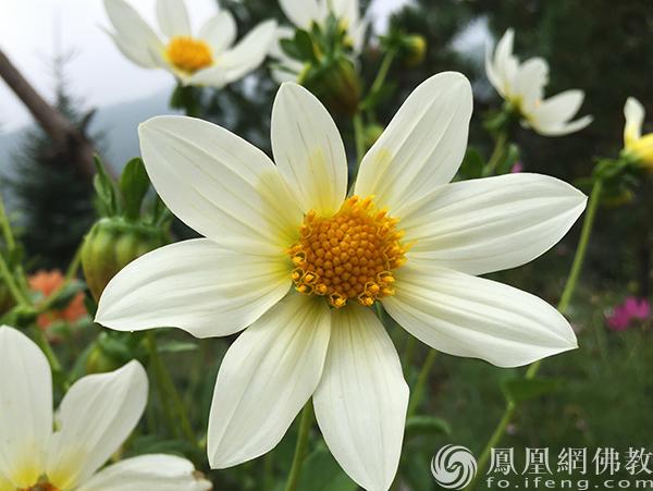 图片来源:凤凰网佛教 摄影:闫秀勇