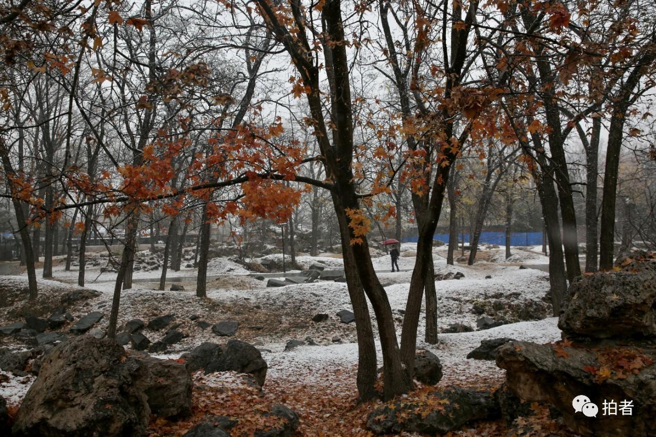 北京初雪最全图集来了!一文看遍城里城外 最新热点 第26张