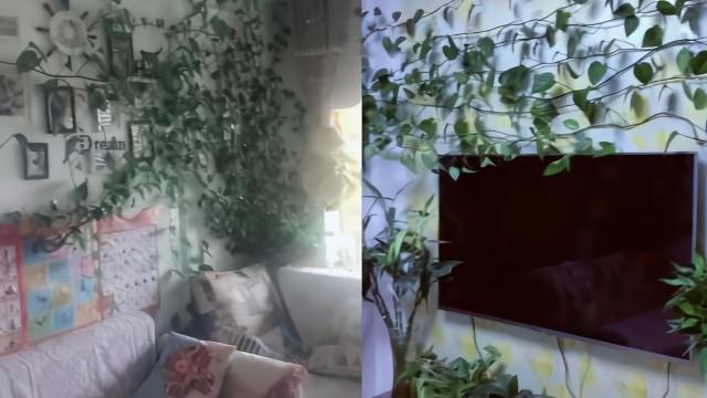 绿箩爬满墙,男子半年没回家客厅变成植物园:好好留着