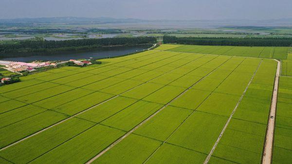 1.3亿吨缺口引发焦点关注:中国粮食到底够不够?插图(1)