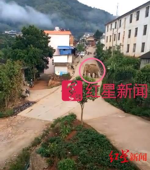 【谷歌官方网站】_不幸!云南澜沧县一村民被野象攻击不幸死亡,当地新增9名监测员