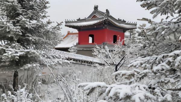 北京灵山5月飞雪:山花与雪景相映成趣