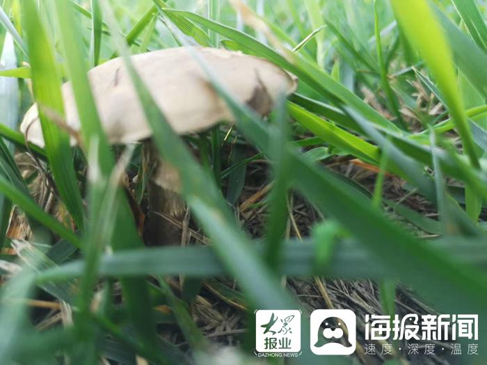 """@东营市民 拒绝""""舌尖上的诱惑"""" 勿食野生蘑菇"""