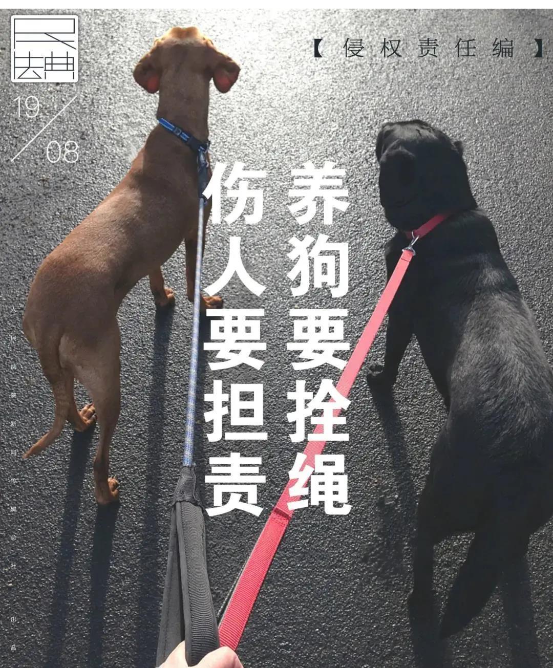 【刷网站流量】_骑车女子被不牵绳藏獒吓得撞墙致高位截瘫,犬主被判赔超百万