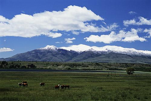 阿根廷广袤的牧场和发展前景吸引了大批欧洲移民。