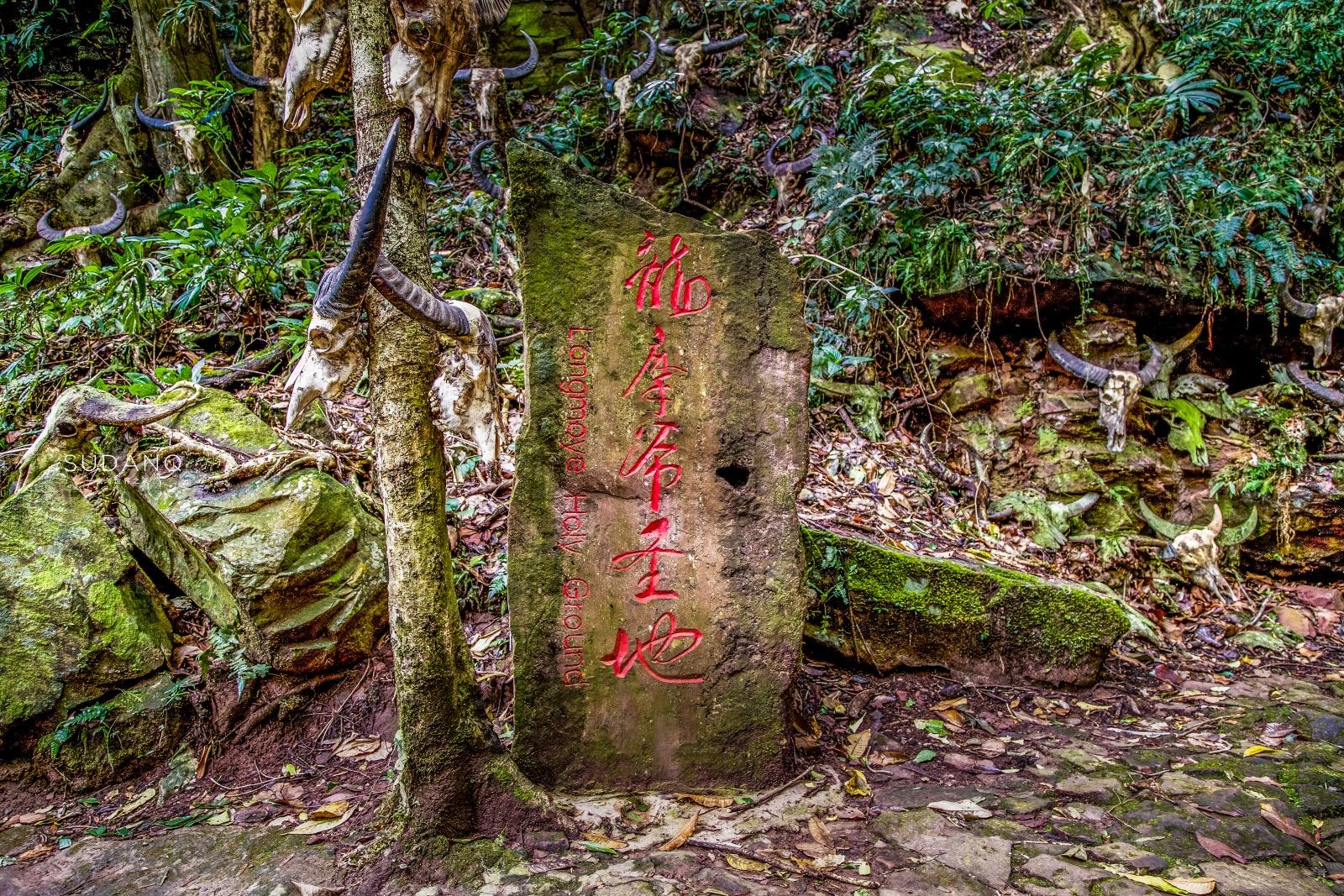 """云南""""最神秘""""的景点:龙摩爷圣地,牛头祭祀和""""猎人头祭谷"""""""