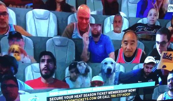 NBA虚拟墙成名利场!性感女球迷+关系户云集,爱犬也来看球了
