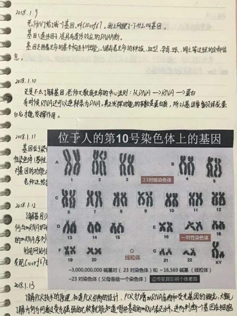 """【如何提高百度排名】_云南小学生研究基因获奖 父亲承认""""过度参与"""""""