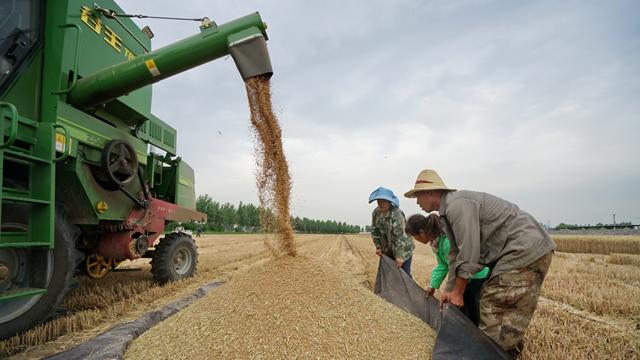 """""""十六连丰""""后的粮食问题:口粮绝对安全遭遇食品消费结构升级插图"""