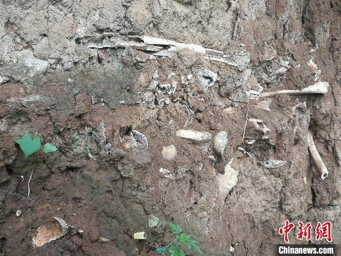 尸骨层遗址位于高平市北城街街道办事处南王庄村的一处玉米地中。 李吉毅 摄