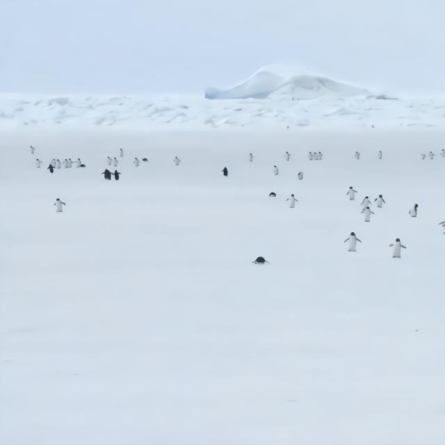 5倍速下的企鹅海冰上行走