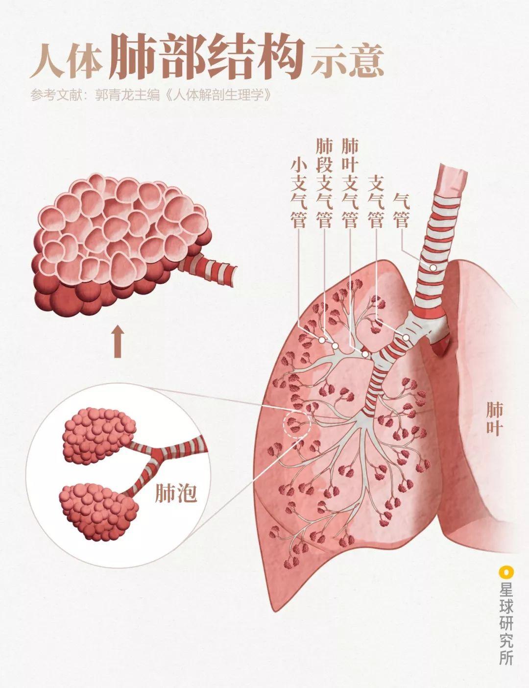 感染病毒后的168小时,你的体内都发生了什么?