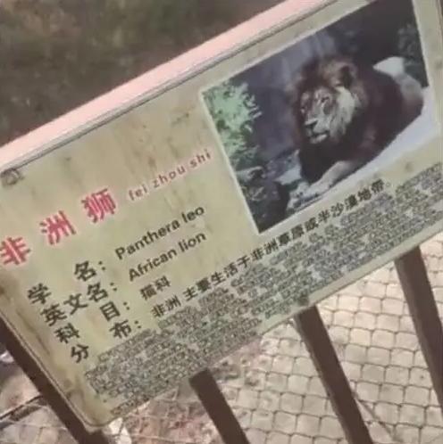 河北一动物园猴山被污水包围,水面浮满绿藻,网友:狮子已死救救猴子
