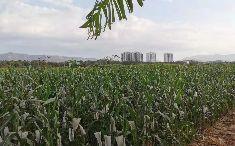 农业农村部发文加强农业转基因生物监管 中科院等曾违规被通报