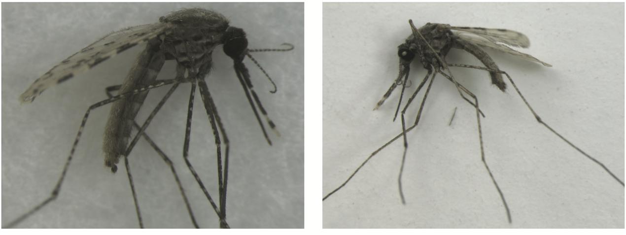 科学家教人工智能算法辨认疟蚊,准确率达99.96%