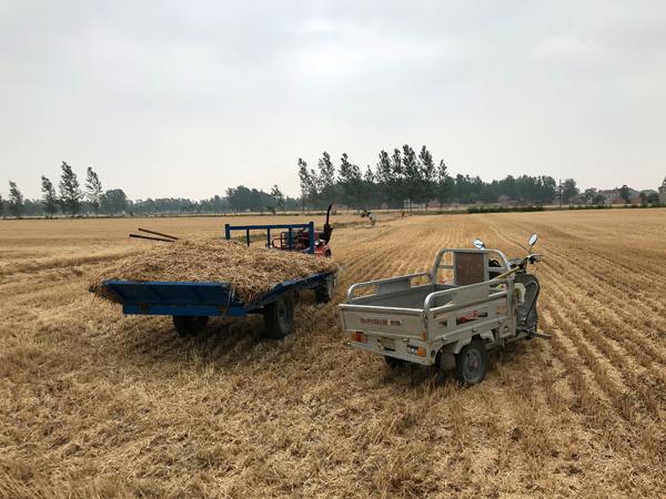 农民将秸秆收集到三轮车上,随后运到指定地点处理。