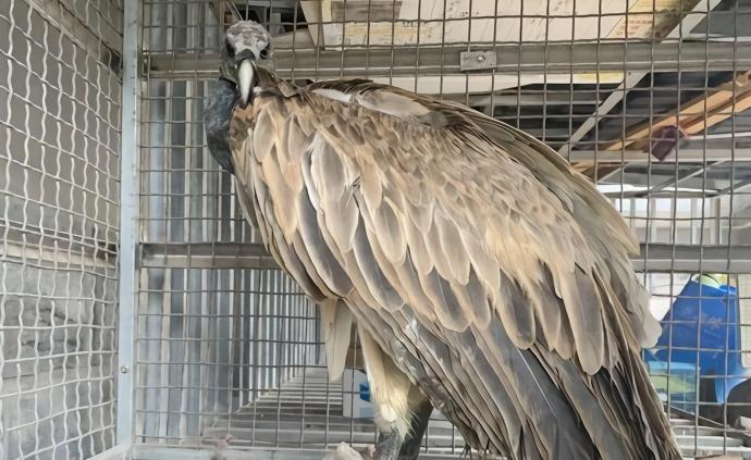 """【亚洲天堂论坛】_水库边发现一只""""大鸟"""",鉴定后竟然是极度濒危"""