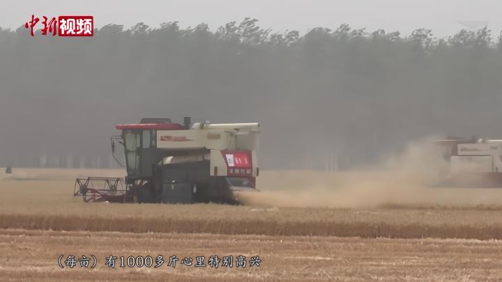 """河南8500万亩小麦""""开镰"""" 18万台收割机""""战三夏"""""""