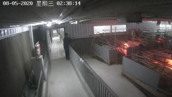 【友情链接的作用】_猪肉涨价有人动起偷猪念头,广西4男子半夜持械抢走70头种猪