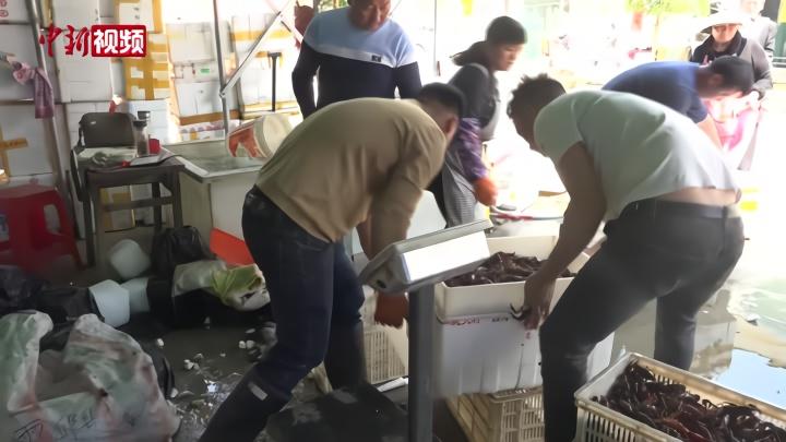安徽迎来龙虾捕捞季 虾稻养殖助力脱贫
