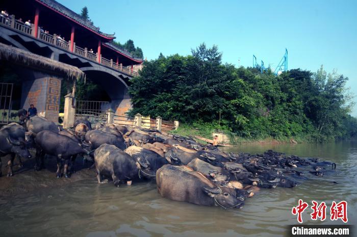 中外摄影师走进四川蓬安盛赞生态人文魅力 蓬安县生态补偿政策