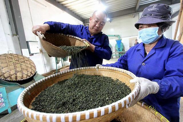 5月5日临海市河头镇向阳山茶叶加工厂
