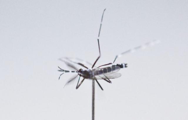 上海报告9例登革热病例,专家:防蚊是主要防范措施