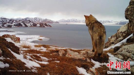 国际生物多样性日 黄河源地区记录到多种野生动物