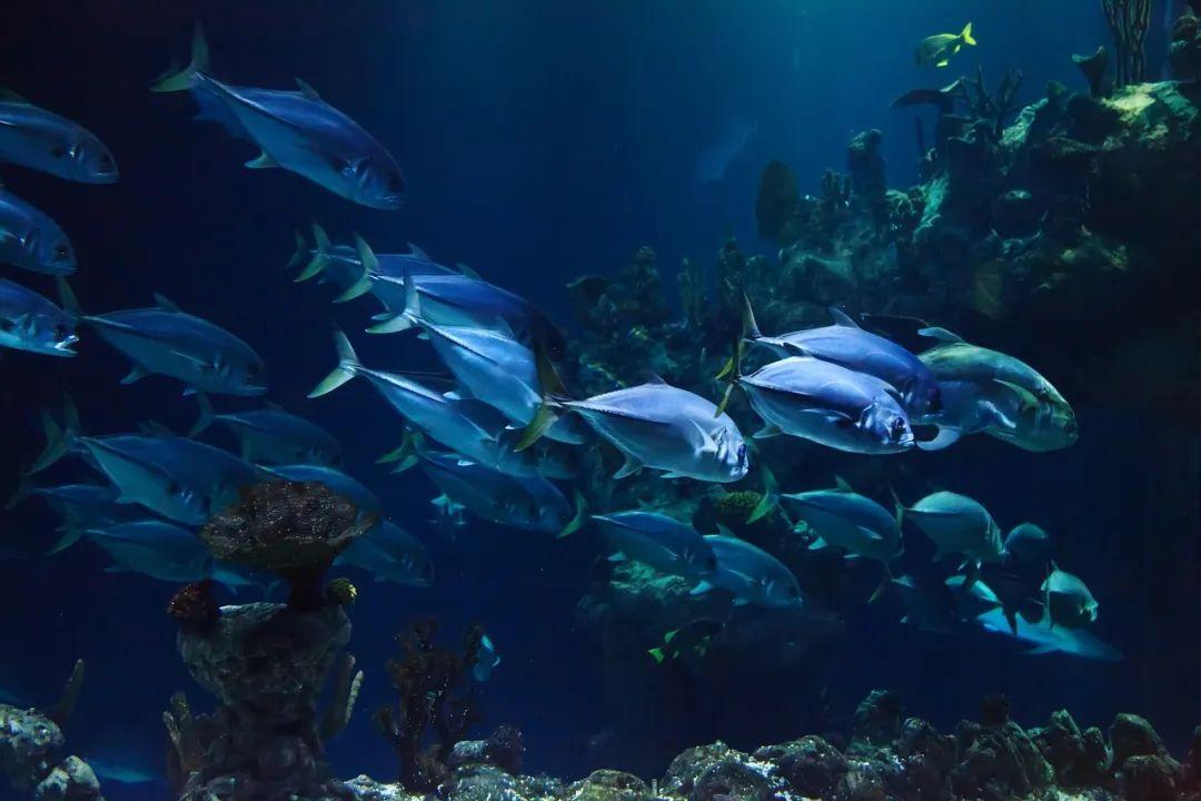 全球变暖会影响鱼类生存 | Pixabay