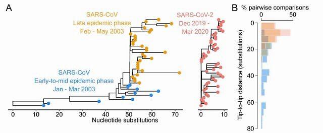新研究发现新冠病毒初期就有高度适应能力,要警惕二次爆发的可能性
