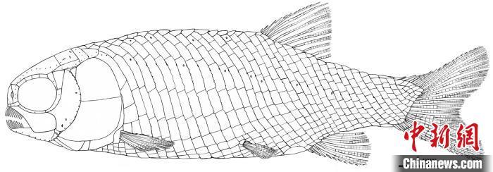 """【alexa 网站排名】_中国科学家发现2.44亿年前""""小巧漏卧鱼"""""""
