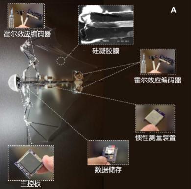 仿生蝙蝠微型飞行器的主要结构   参考文献[3]