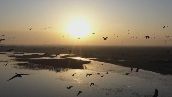 瞰见|甘肃高台:湿地美如画,候鸟翩翩飞