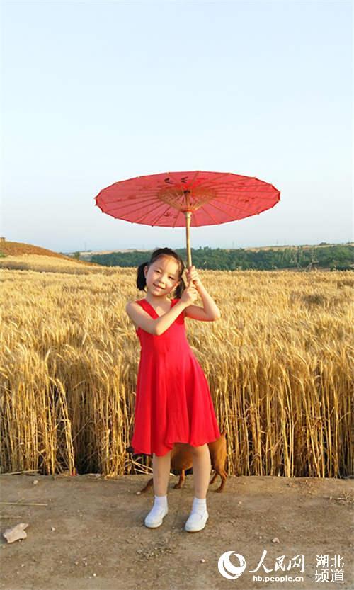 麦收时节 丹江口千亩麦地梯田成为市民网红打卡地