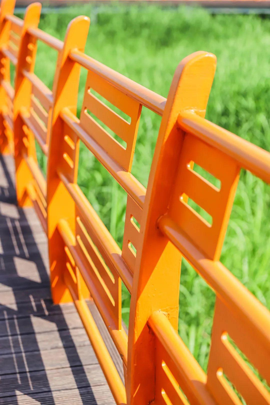 周五立秋时节,在夏日终曲里回顾夏天高温的色彩