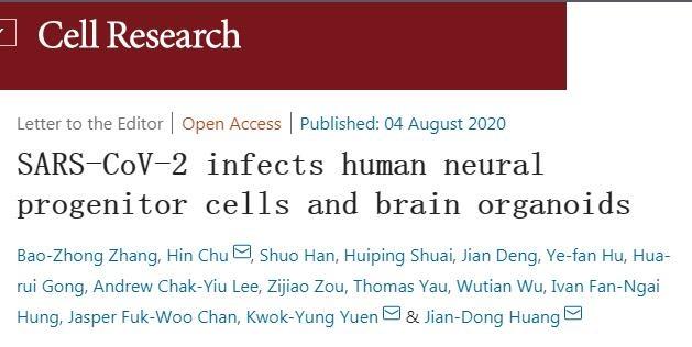 新冠病毒可以直接感染神经系统
