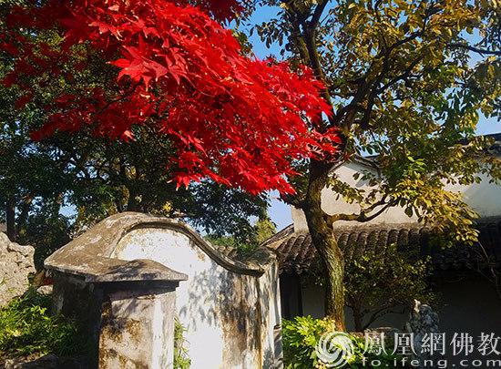 图片来源:凤凰网佛教 摄影:丹珍旺姆