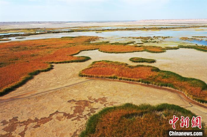 """张掖湿地""""红染大地,湿地似火""""景观。 郑耀德 摄"""