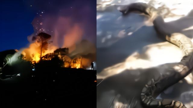 男子为寻刺激纵火烧山 60斤巨蟒被烧死