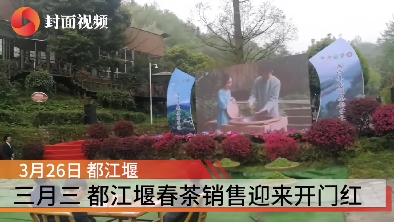 """互联网+农业 茶商""""云端""""相聚 都江堰春茶销售迎来开门红"""