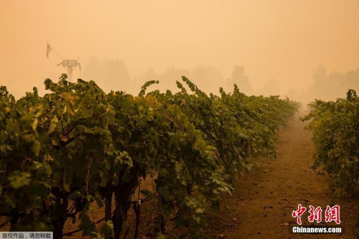【彩乐园app进入12dsncom】_特朗普批准加州因山火进入重大灾难状态