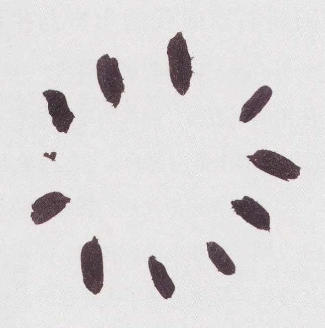 河姆渡出土的炭化稻谷,距今6000-7000年
