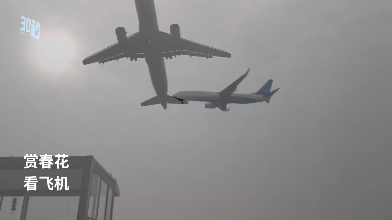 30秒丨拍飞机赏春花 成都空港花田又回来了