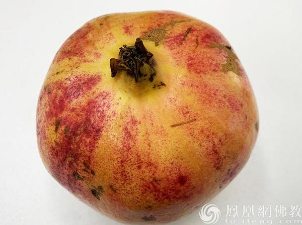 石榴(图片来源:凤凰网佛教 摄影:李婷)