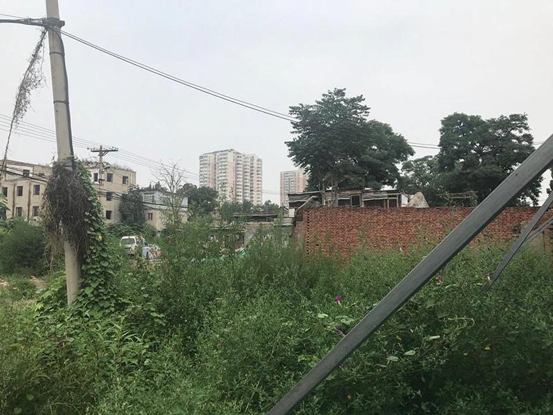 榴乡路西侧平房区域杂草.jpg