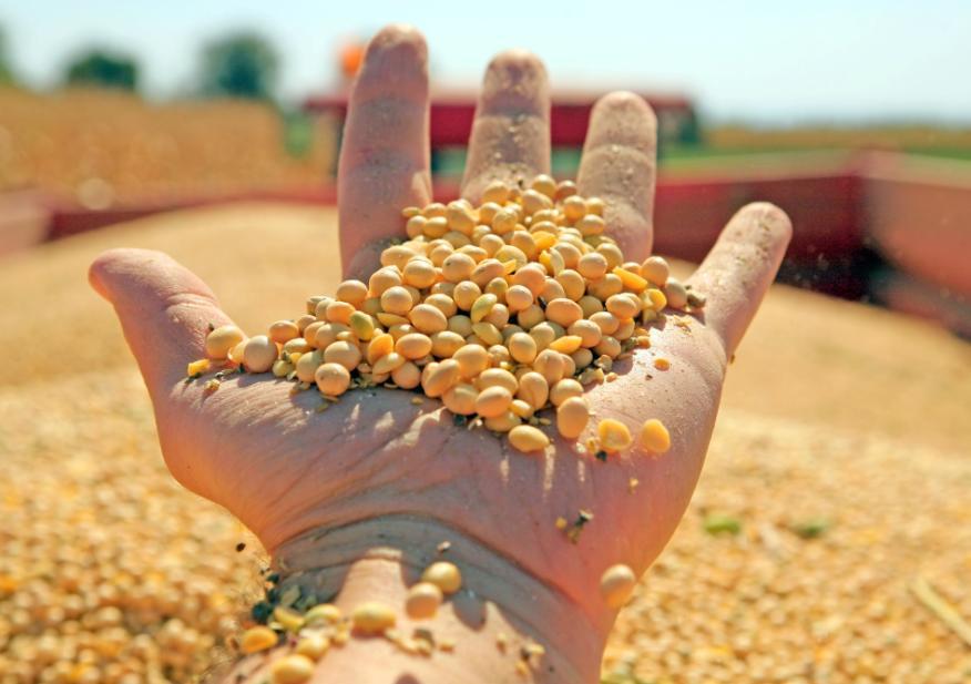 大豆进口又见大单:8月158船运往中国  大豆到港量近1000万吨