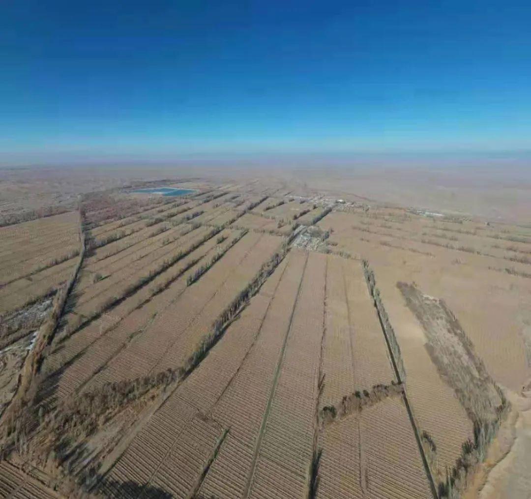 触目惊心!万亩沙漠防护林被毁灭性砍伐,敦煌防沙最后屏障几近失守