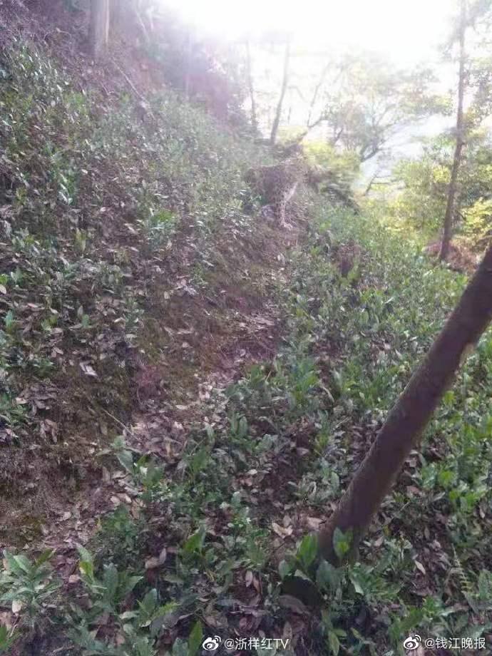 杭州西湖区龙门坎村村民祝财松拍到疑似豹子照片。据祝财松说,本图系村民翻拍他的老年机照片后发到网上的。  微博@钱江晚报 图