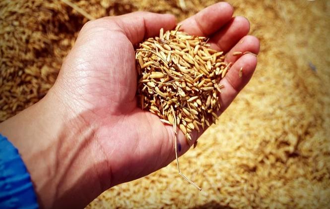 暴雨襲擊四大糧食生產大省后 中國糧食產量損失了多少?