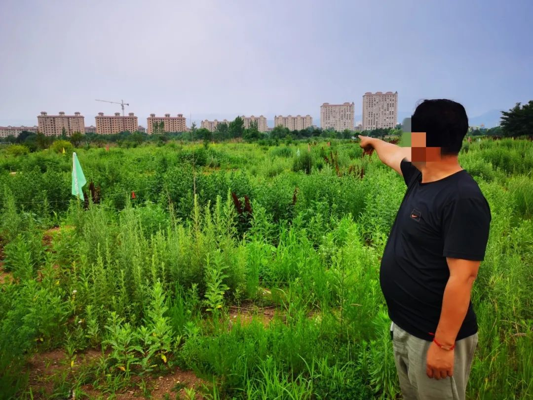 村民向记者指出他家被占的土地一直荒废。王迎超/摄